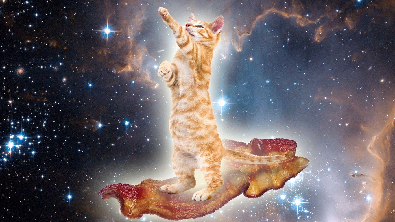 flying cat.JPG